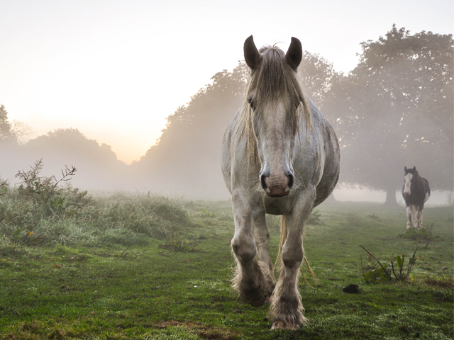 Horse - Stuart Scott