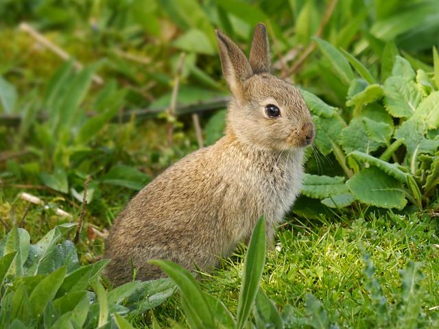 Rabbit - Lucy Flower