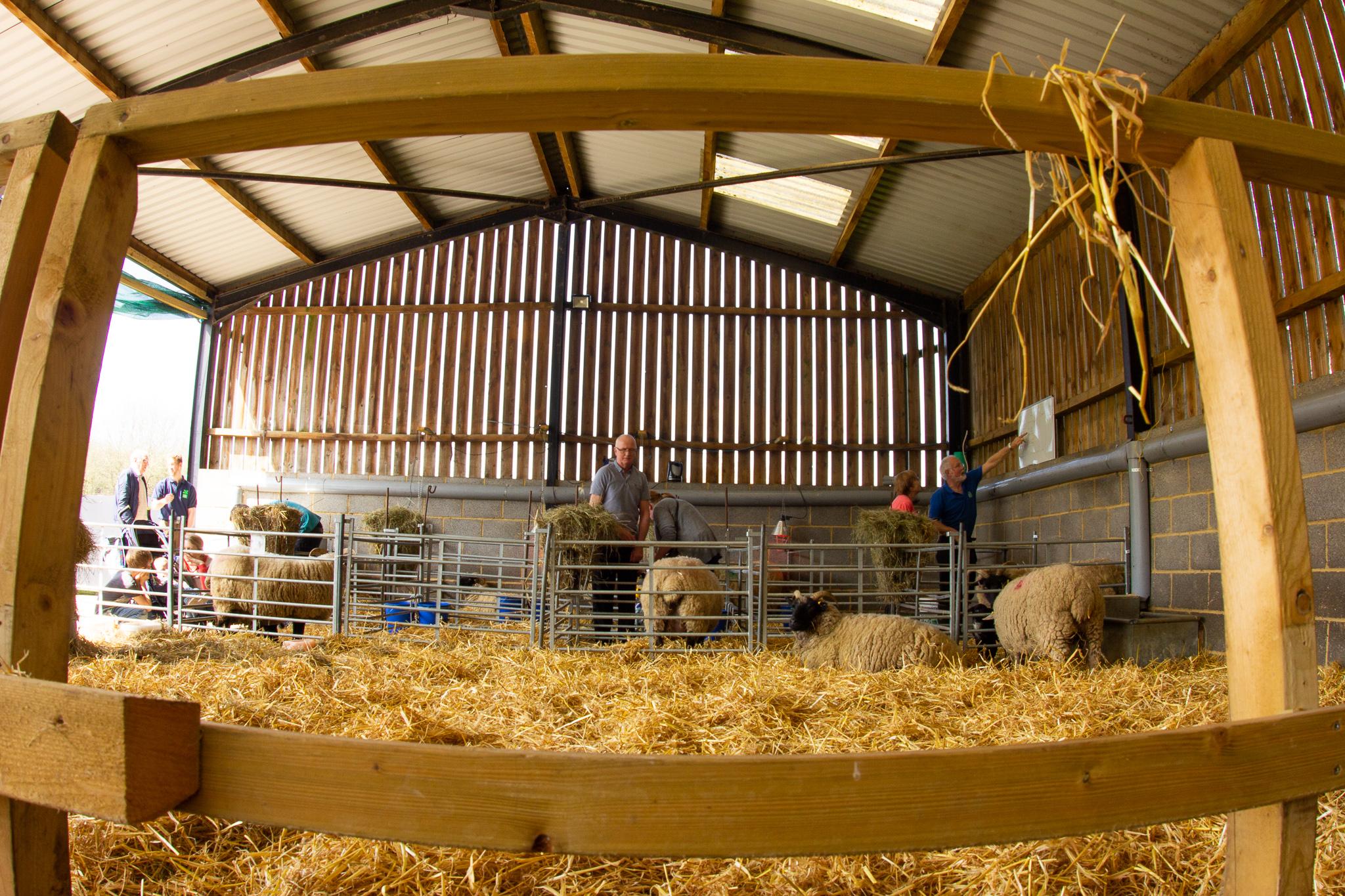 The lambing barn