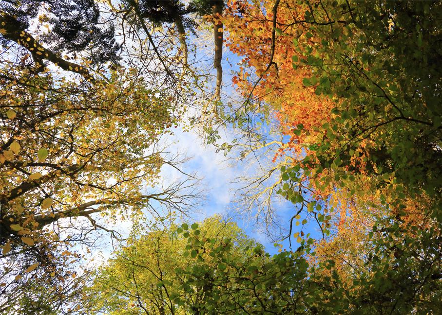 October - Hay Wood - Ian Waterfield